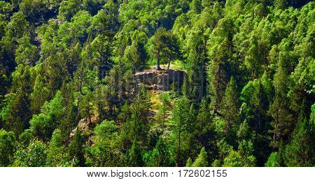 Deciduous and coniferous forest on the hillside