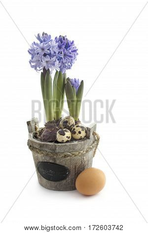 Easter concept : hyacinth flowers with chicken eggs