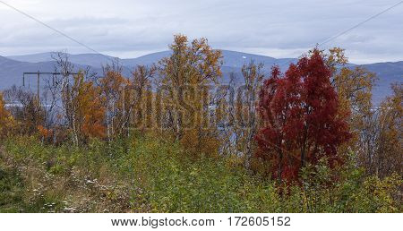 View of a colorful roadside in Lapland. Electrical line, lake and mountains in the background.