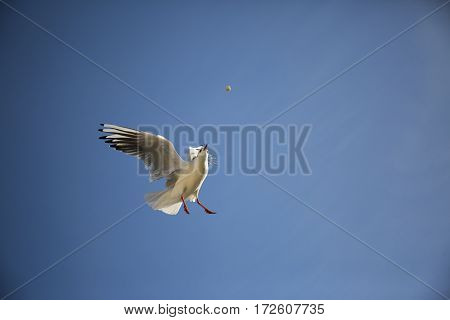 Bird fed in flight on a background of blue sky.