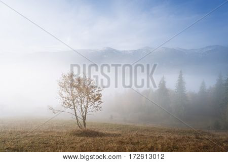 Lonely tree in a mountain valley. Autumn landscape with morning fog. Carpathians, Ukraine, Europe