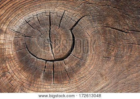 Board with knot. old wood texture. Natural abstraction. Brown background for design