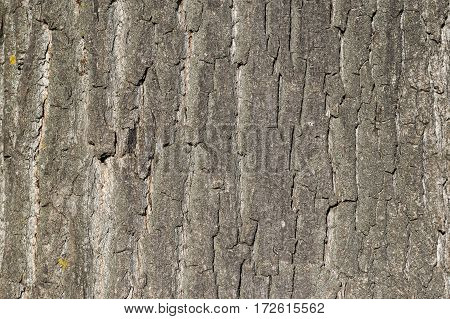 Bark tree trunk pattern detail wooden texture brown