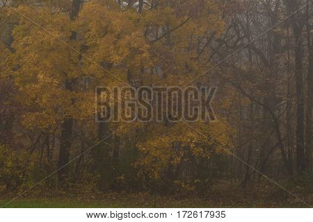 Trees in a forest in autumn morning fog