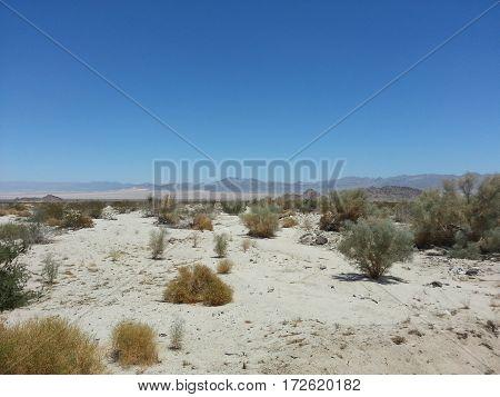 Desert shrubs and sand at Joshua Tree National Park