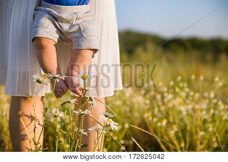 Closeup of baby's bare feet. Young mother holding her little baby son on a wild flowers meadow on sunny summer day. Happy family. Woman with a child walking in the daisy field in the park. Outdoors.