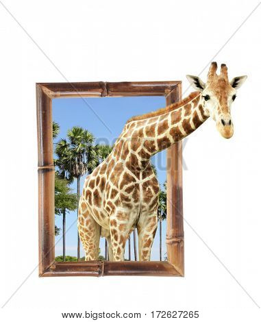 Giraffe in bamboo frame with 3d effect. Isolated on white background