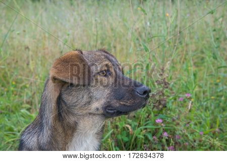 Portrait of a cute brown stray dog