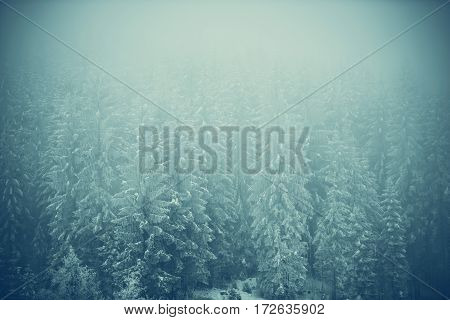 Frozen Forest Landscape Covered by Fog. Nature Photo Background. Winter Season Backdrop.