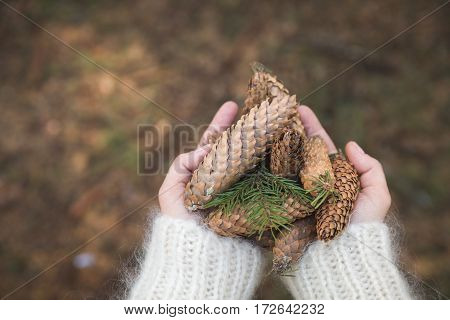 Top view on woman's hands full of pine cones. Christmas holidays and winter concept