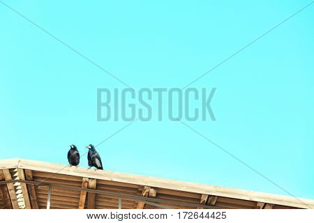 Two birds on wooden roof of warehouse
