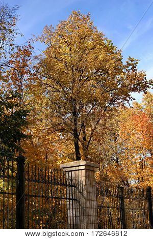 Yellow Autumn Trees In The Park Behind The Fence
