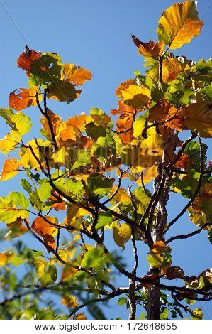 yellow and orange color leaves in deciduous forest