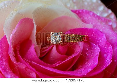 Macro closeup rose with dew drops and beautiful sparkling diamond ring Rose water drops ring