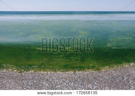 Seashore landscape