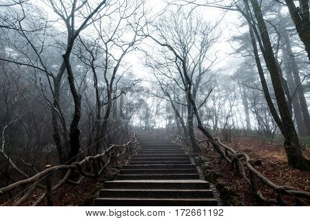 nature trail at Mountain Huangshan Anhui China.