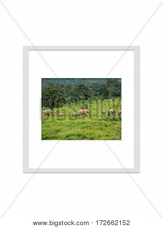 photo frame isolated for decorate interior and souvenir.