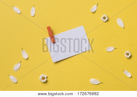 Spring or summer background with copy space for text: business / credit / visiting card mockup with orange clothespin chamomiles and petals. Top view. Flat lay.