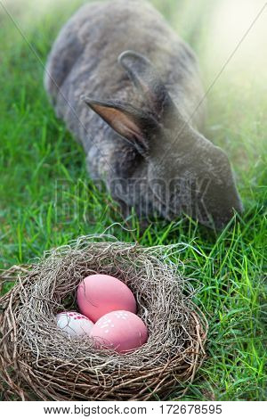 Easter eggs in Fresh Green Grass and pink spring Flowers. Sunlight. meadow. rabbit  bunny