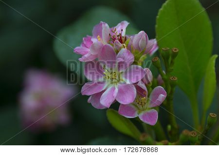 close up of tinny pink flower surrounded by green leaves selective focus blurred background soft focus