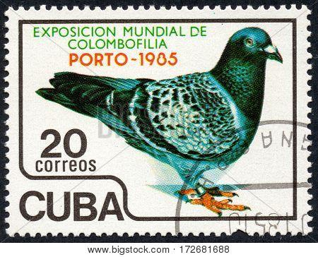 UKRAINE - CIRCA 2017: A stamp printed in Cuba shows the Pigeon. World exhibition of colombofilia Porto-1985 circa 1985