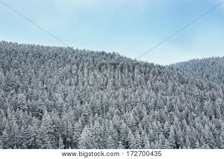 snow covered wonderland forest in mountains landscape