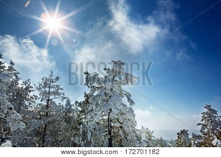 Beautiful snowy sunshine winter landscape in the mountains