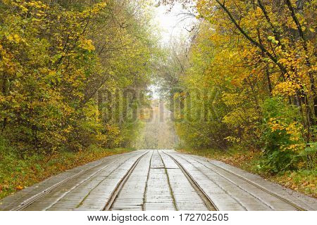 Tram railway on road in yellow autumn park in city at overcast day