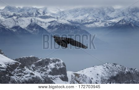 A bird fying through a winter mountainscape
