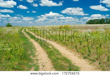 Lonely track in flowering Ukranian steppe .