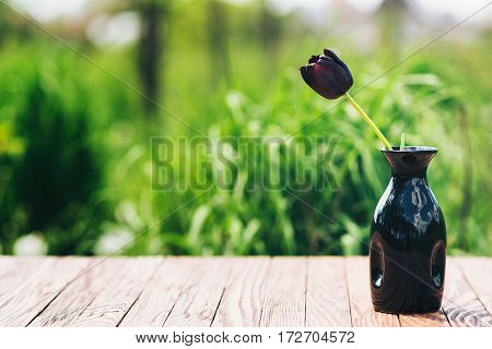 The One black tulip in a vase outdoor.