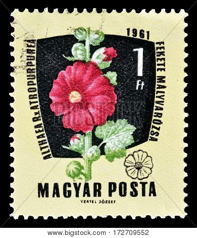 HUNGARY - CIRCA 1961 : Cancelled postage stamp printed by Hungary, that shows Purple Hollyhock.
