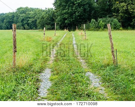 Beaten track or worn path through meadow toward foliage trees with poles around, center composition, moving towards objective, lush and fresh, natural landscape of central Europe