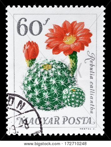 HUNGARY - CIRCA 1965 : Cancelled postage stamp printed by Hungary, that shows Cactus.