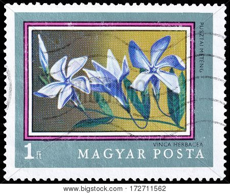 HUNGARY - CIRCA 1971 : Cancelled postage stamp printed by Hungary, that shows Herbaceous Periwinkle.