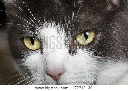 Close up shot of a cat looking at the camera