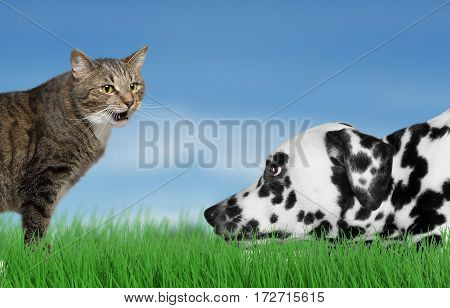 Cute dog and cat at beauty grass background