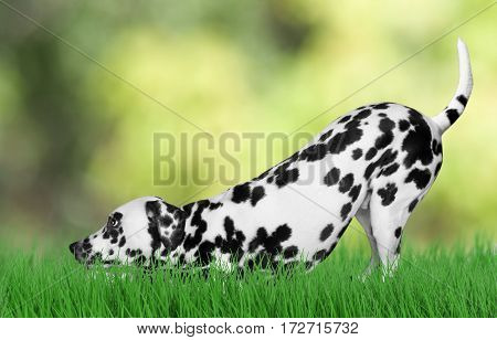 Cute Dog playing outside on grass background