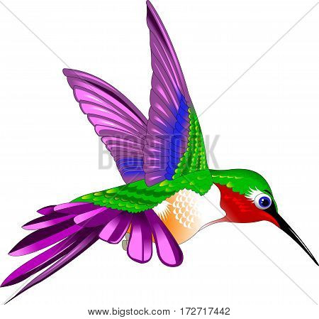 Flying Rufous Hummingbird - Selasphorus rufus. Vector and illustration