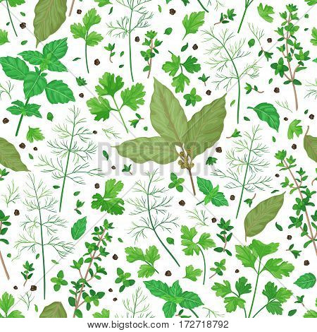 Seamless pattern with flavoring green herbs and spices. Thyme bay leaves dill parsley basil scattered leaves and pepper isolated on white. Cooking theme.