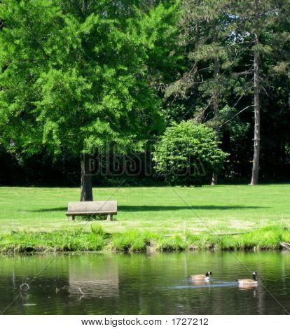 poster of bench under tree at park at the edge of a pond