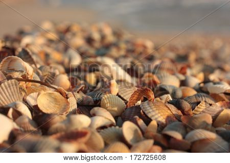 Seashell. Background. Colorful bright texture nature beach