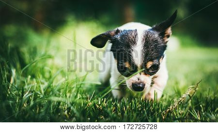Dog playing outside on the grass spring lawn. Selective focus bokeh background.