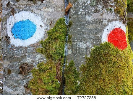 Abstract tree background - touristic sign