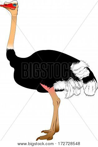 Funny cartoon ostrich isolated on white background vector illustration