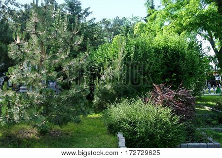 Anapa, Russia: Vegetation in city park near seaside promenade