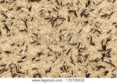 dried grains or seed white and black of wild rice for a background and texture closeup of speckled color of beige tone