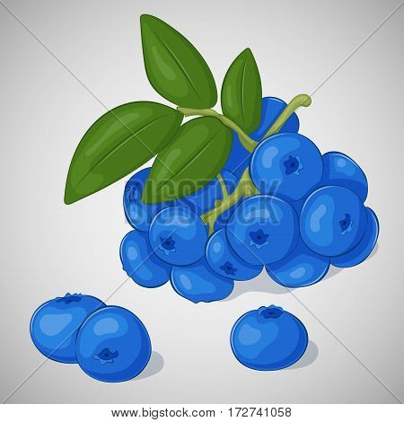 Bright juicy blueberry on grey background. Sweet delicious for your design in simple cartoon style. Vector illustration. Berries Collection.