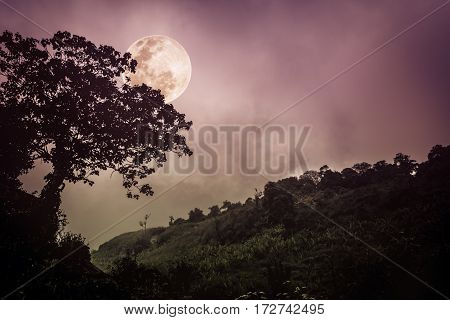 Silhouettes Of Tree Against Dark Sky On Tranquil Nature Background.