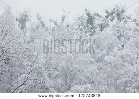 Fairy winter forest in the snow. Winter time. Heavy snowfall. Trees in the snow. Beautiful landscape with snow. The trunks and branches of trees.